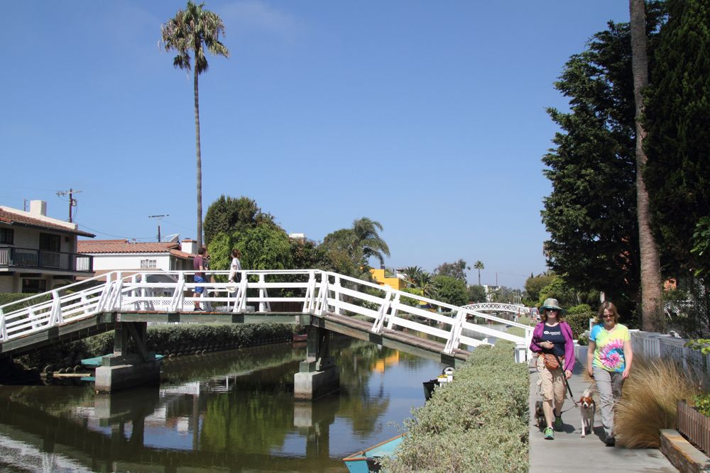 Dog Walk on Venice Canal
